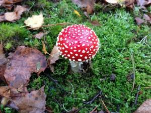 Autumn in French for children: Harvest!