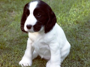 image for Puppy Story in French